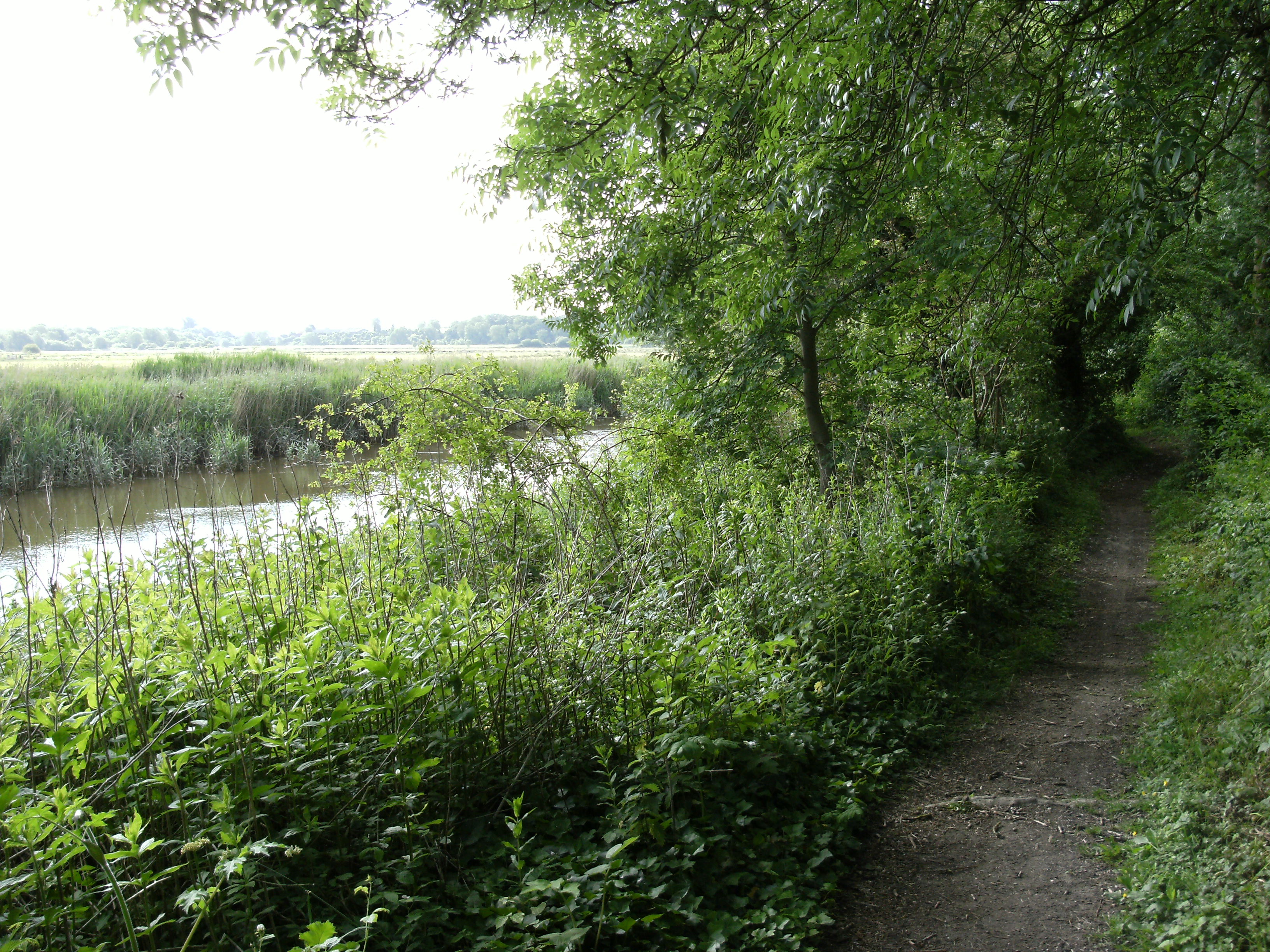 Riverbank trail to Arundel
