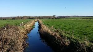 A field near Poling